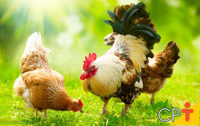 Alimentação de galinhas caipiras   Artigos Cursos CPT