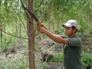 Acidente de trabalho rural - garanta a segurança dos seus trabalhadores