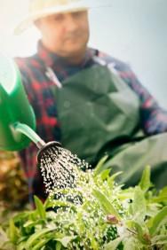 O jardineiro deve executar periodicamente os tratos culturais adequados como poda e irrigação do jardim