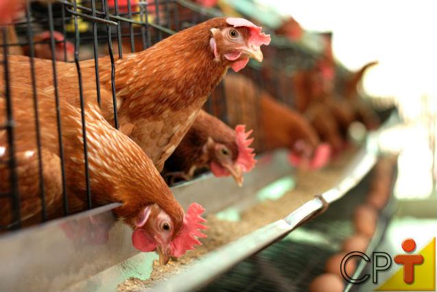 Frangos e galinhas caipiras: dica de sucesso para o empreendimento   Artigos Cursos CPT