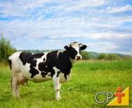 Gado de leite: hábitos e características