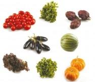 Mini legumes: alimentos atraentes e de tamanhos reduzidos, que vieram para ficar