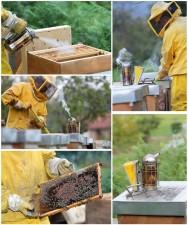 Quando atacada pela doença, as paredes da colmeia podem ser desinfectadas com o uso de ácido fênico 60%, pulverizando o material e colocando-se, em seguida, por um longo tempo no sal