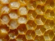Apicultura - doenças da cria das abelhas e tratamento
