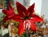 Ofício de florista mistura técnica e arte na produção de arranjos