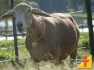 O número de cordeiros terminados anualmente, depende diretamente do percentual de ovelhas prenhes