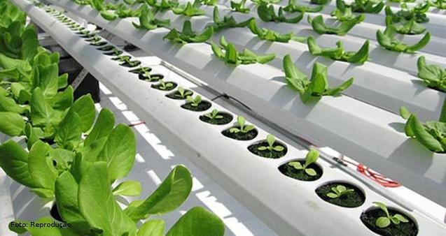 Nutrição de plantas em hidroponia