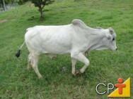 Bovinos de corte - desempenho do gado a pasto