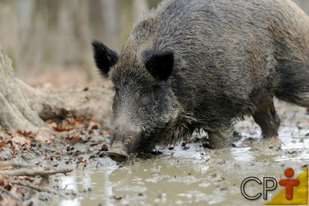 Artigos Cursos CPT da área Animais Silvestres