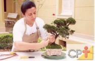 Para o cultivo do bonsai, é necessário o uso de alicate de bico fino, tesoura tradicional de podar galhos finos, arame de cobre ou alumínio, entre outros