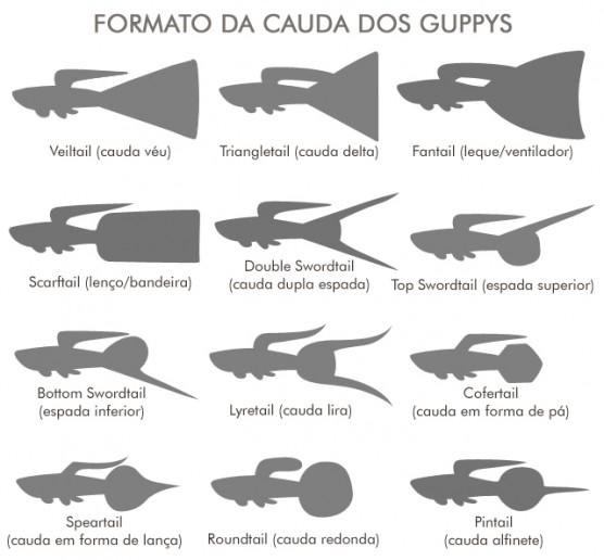 As diferentes cauda dos guppys