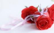 Produza rosas e lucre com datas comemorativas como o Dia Internacional da Mulher