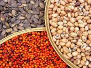 O local mais simples de coleta de sementes é a mata nativa.
