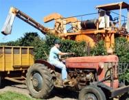 Aprenda Fácil Editora: Mão de obra escassa eleva custos da colheita do café em Minas Gerais
