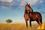 O cavalo é, por natureza, um animal de fuga, ou seja, sua principal defesa é fugir, por isso o domador deve ser cauteloso ao se aproximar