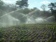 Café Conilon - sistema de irrigação