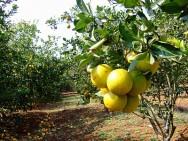 Aprenda Fácil Editora: Preparo do terreno para implantação do pomar