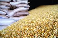 Milho - armazenamento em espigas e armazenamento a granel