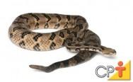 Criação de serpentes: atividade que gera interesse