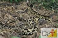 Criação de serpentes: doenças mais comuns