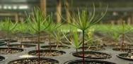 Aprenda Fácil Editora: Florestas plantadas precisam ser planejadas para darem lucro