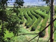 Aprenda Fácil Editora: A escolha de máquinas e implementos agrícolas depende da topografia do seu terreno