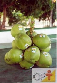 A produção orgânica de coco garante a obtenção de produtos mais saudáveis