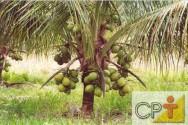 O cultivo do coco orgânico engloba a necessidade de controlar plantas espontâneas que se desenvolvem próximas aos coqueiro