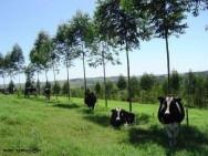 Arborização de pastagem - melhores espécies nativas e processo de arborização