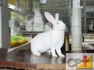 Criação de coelhos: manejo dos reprodutores