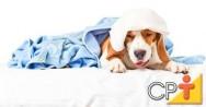 Como montar um pet shop: doenças mais comuns
