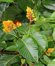 Bovinos - intoxicação por plantas,  diagnóstico e prevenção