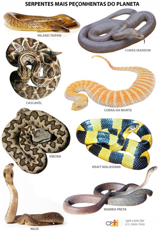 As cobras ou serpentes mais venenosas do mundo