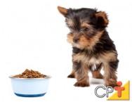 Como montar um pet shop: alimentação dos cães
