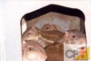 Criação de pacas: estado de choque produzido pelo estresse nas pacas