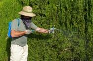 Acidente de trabalho rural - intoxicação devido à má utilização de agrotóxicos