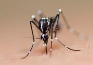 Dengue - Sintomas, prevenção, tratamento, tipos de mosquito e muito mais