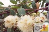 Apicultura migratória: pasto apícola