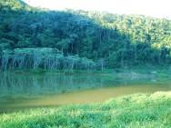 O Código Florestal Brasileiro