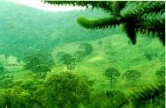 Código Florestal Brasileiro - Das Áreas de Preservação Permanente - Da Delimitação