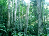Código Florestal Brasileiro - Da Área de Reserva Legal - Da Delimitação