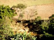 Código Florestal Brasileiro - Da Supressão de Vegetação para Uso Alternativo do Solo