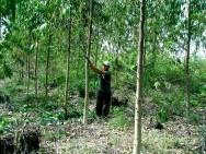ódigo Florestal Brasileiro – Da Exploração Florestal