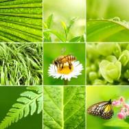 Código Florestal Brasileiro – Do Programa de Apoio e Incentivo à Preservação e Recuperação do Meio Ambiente