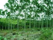 Código Florestal Brasileiro - Do Controle do Desmatamento
