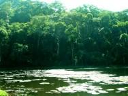 Código Florestal Brasileiro – Disposições Complementares e Finais