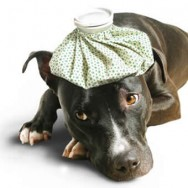 Aprenda Fácil Editora: Salve o seu cão aprendendo os primeiros socorros