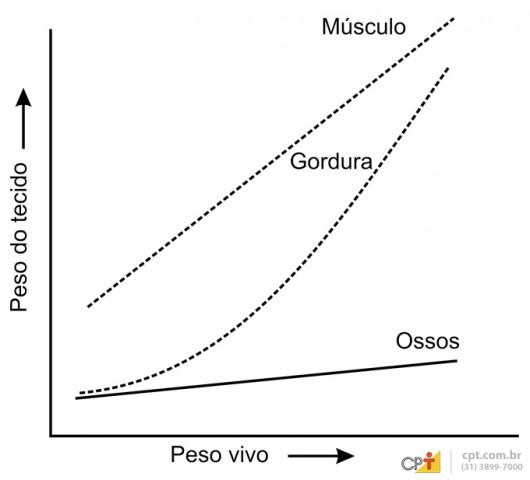 O ganho de peso do animal se dá pelo acréscimo de gordura, tecido ósseo e massa muscular