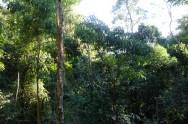 Código Florestal Brasileiro - Disposições Transitórias - Das Áreas Consolidadas em Áreas de Reserva Legal