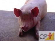 Sistema orgânico de criação de suínos: resultados
